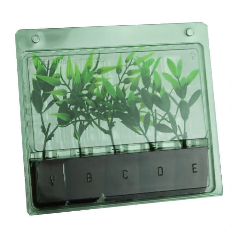 Versandbox für Stecklinge 5 Plätze - 208x185x40mm